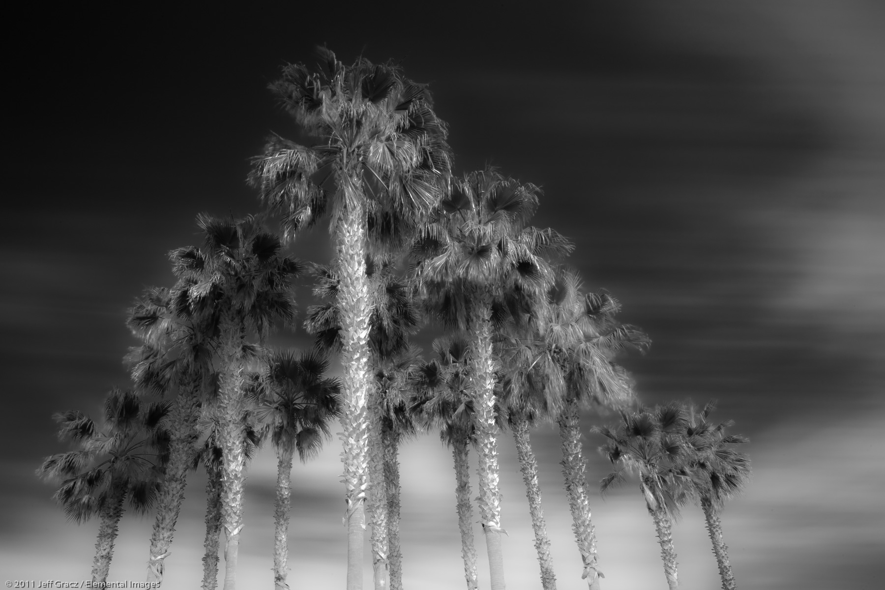 Palms | Imperial Beach | CA | USA - © © 2011 Jeff Gracz / Elemental Images - All Rights Reserved Worldwide