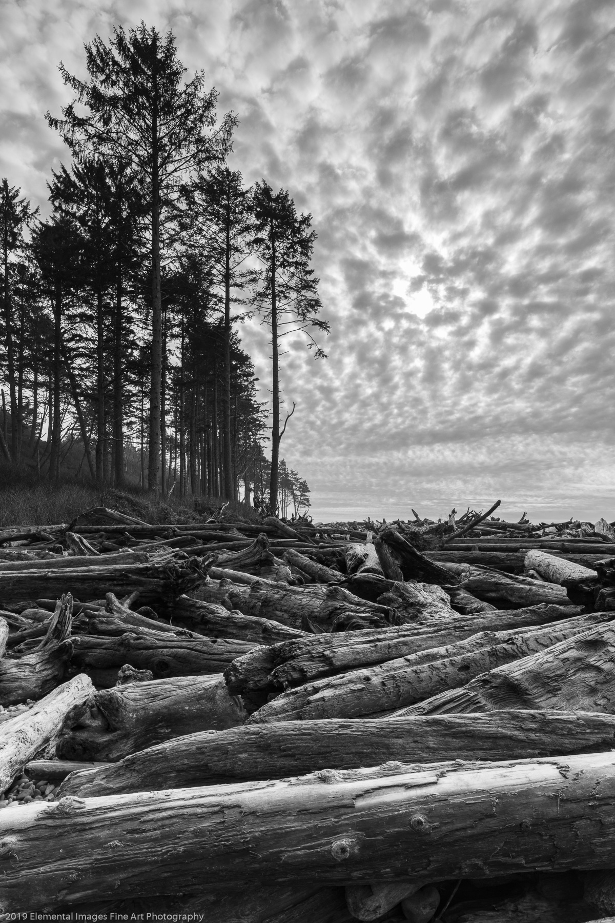 Sky and Timber | Olympic National Park | WA | USA - © 2019 Elemental Images Fine Art Photography - All Rights Reserved Worldwide