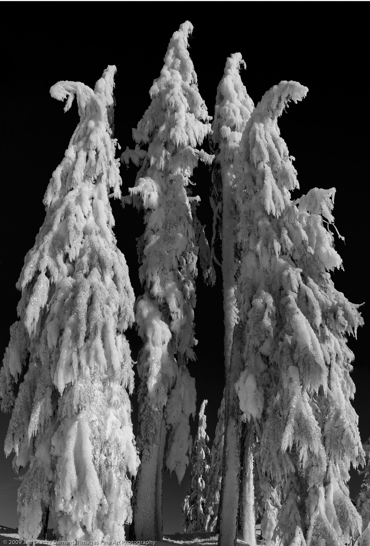 Matriarchs of Ice      OR   USA - © © 2009 Jeff Gracz / Elemental Images Fine Art Photography - All Rights Reserved Worldwide