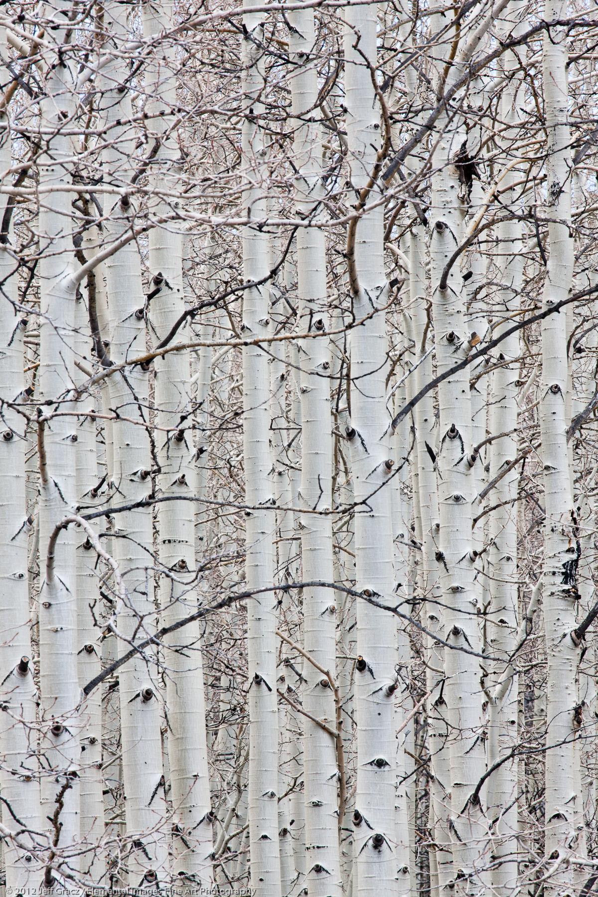 Aspens Trunks | Boulder Mountain | UT | USA - © © 2012 Jeff Gracz / Elemental Images Fine Art Photography - All Rights Reserved Worldwide