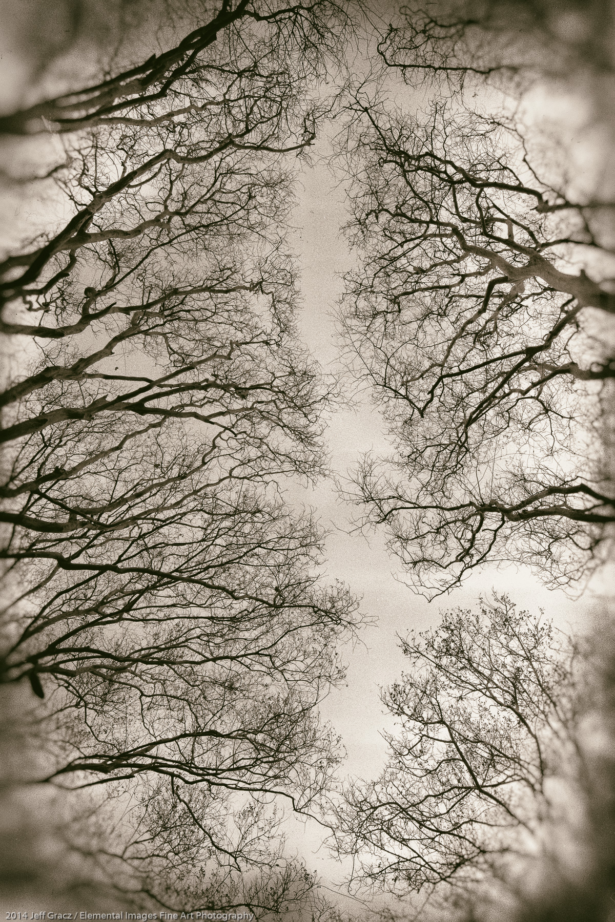 Branches VIII | Dallas | TX | USA - © 2014 Jeff Gracz / Elemental Images Fine Art Photography - All Rights Reserved Worldwide