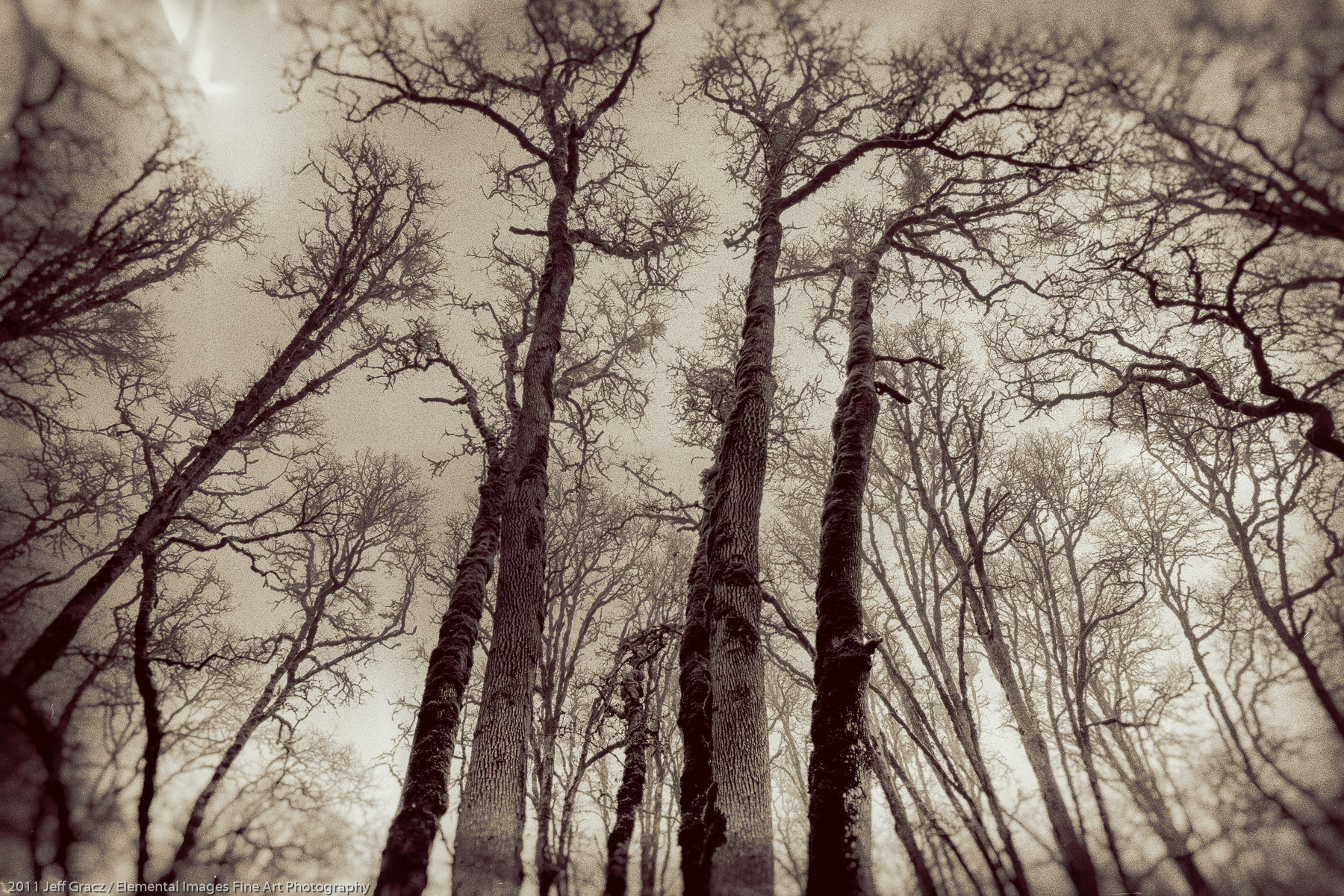 Branches XVII |  | OR | USA - © 2011 Jeff Gracz / Elemental Images Fine Art Photography - All Rights Reserved Worldwide