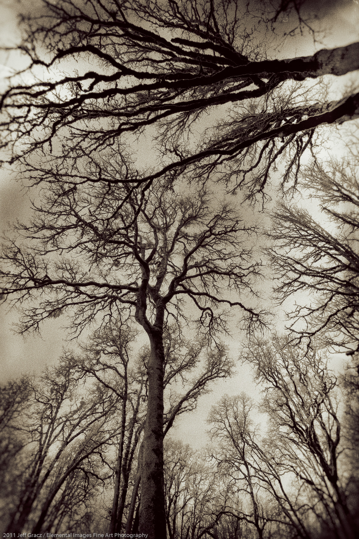 Branches XVIII |  | OR | USA - © 2011 Jeff Gracz / Elemental Images Fine Art Photography - All Rights Reserved Worldwide