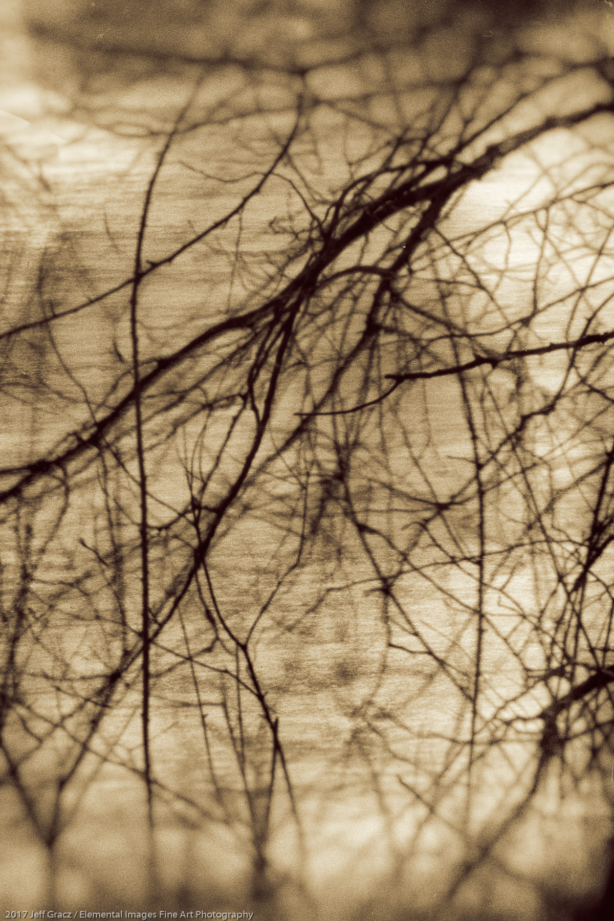 Branches #27   Washougal   WA   USA - © 2017 Jeff Gracz / Elemental Images Fine Art Photography - All Rights Reserved Worldwide