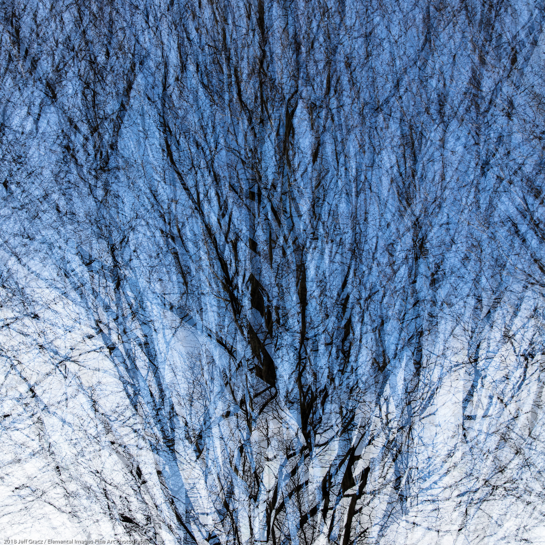 Branches #41 | Portland | OR | USA - © 2018 Jeff Gracz / Elemental Images Fine Art Photography - All Rights Reserved Worldwide