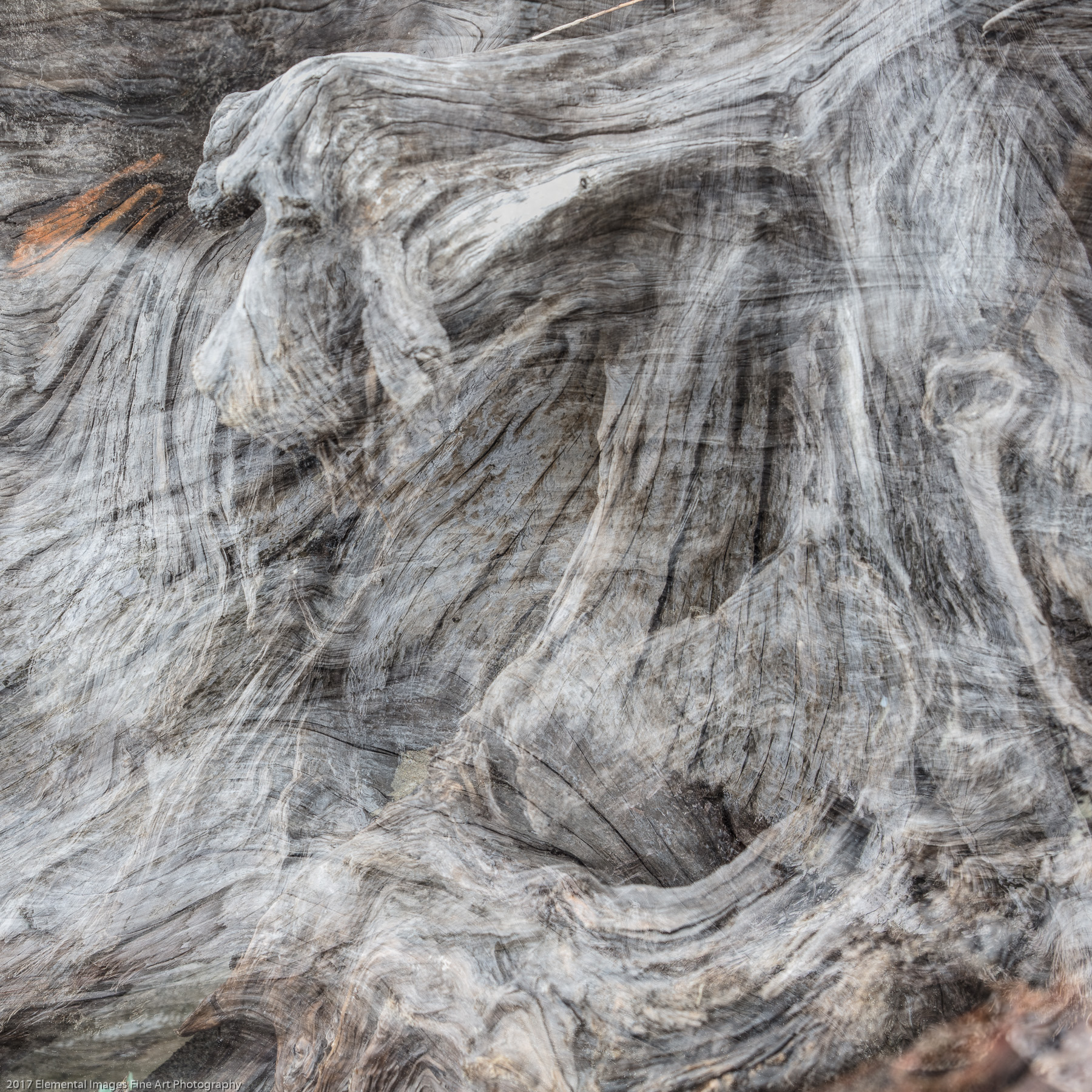 Driftwood #21   Bandon   OR   USA - © 2017 Elemental Images Fine Art Photography - All Rights Reserved Worldwide
