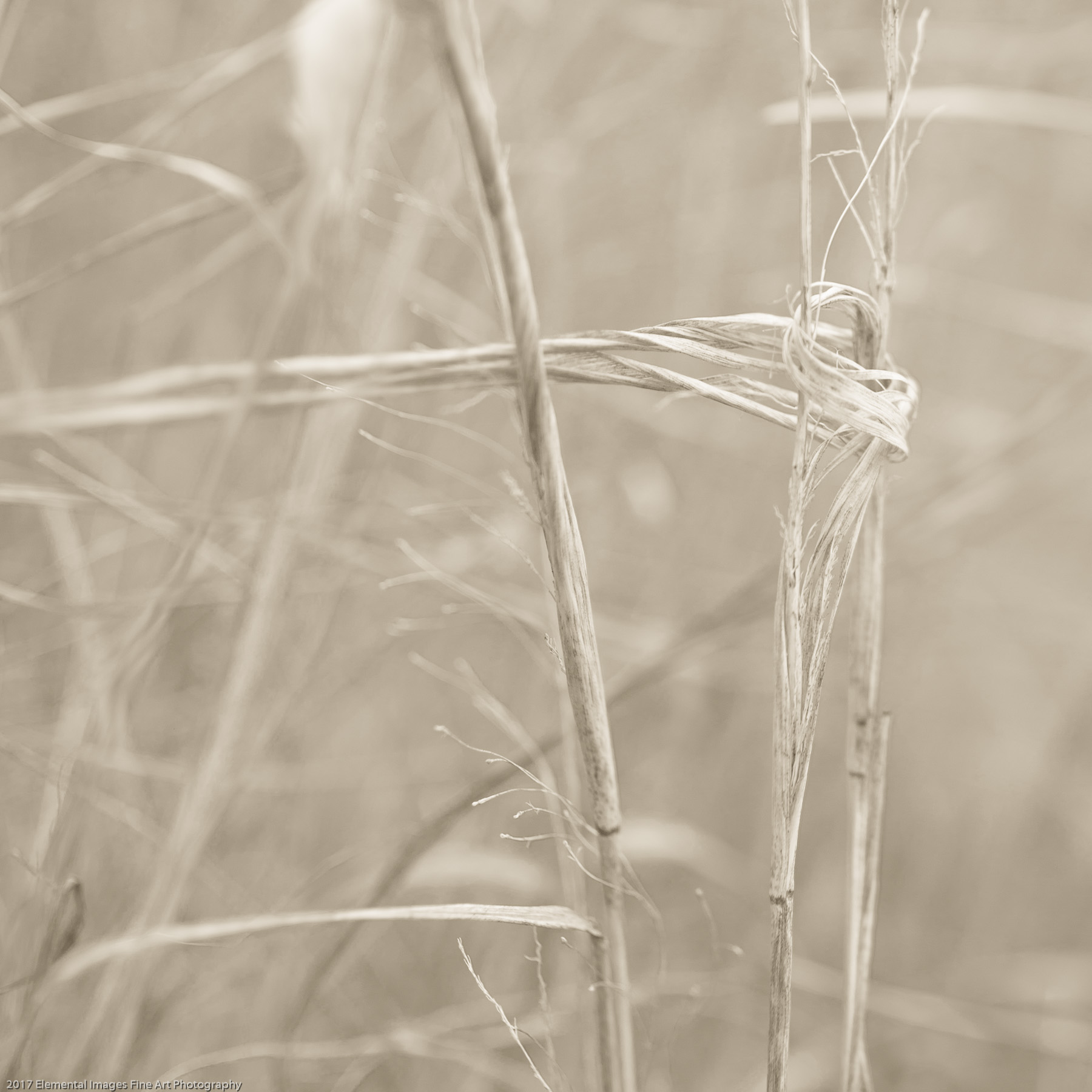 Grasses #149 | Cottonwood Canyon State Park | OR | USA - © 2017 Elemental Images Fine Art Photography - All Rights Reserved Worldwide