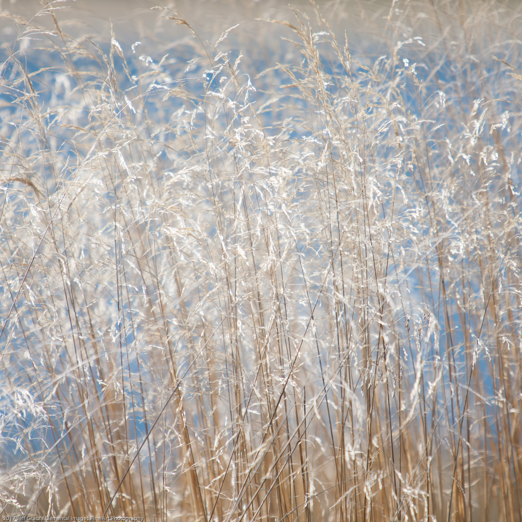 Grasses #164 | Three Rocks | OR | USA - © 2017 Jeff Gracz / Elemental Images Fine Art Photography - All Rights Reserved Worldwide