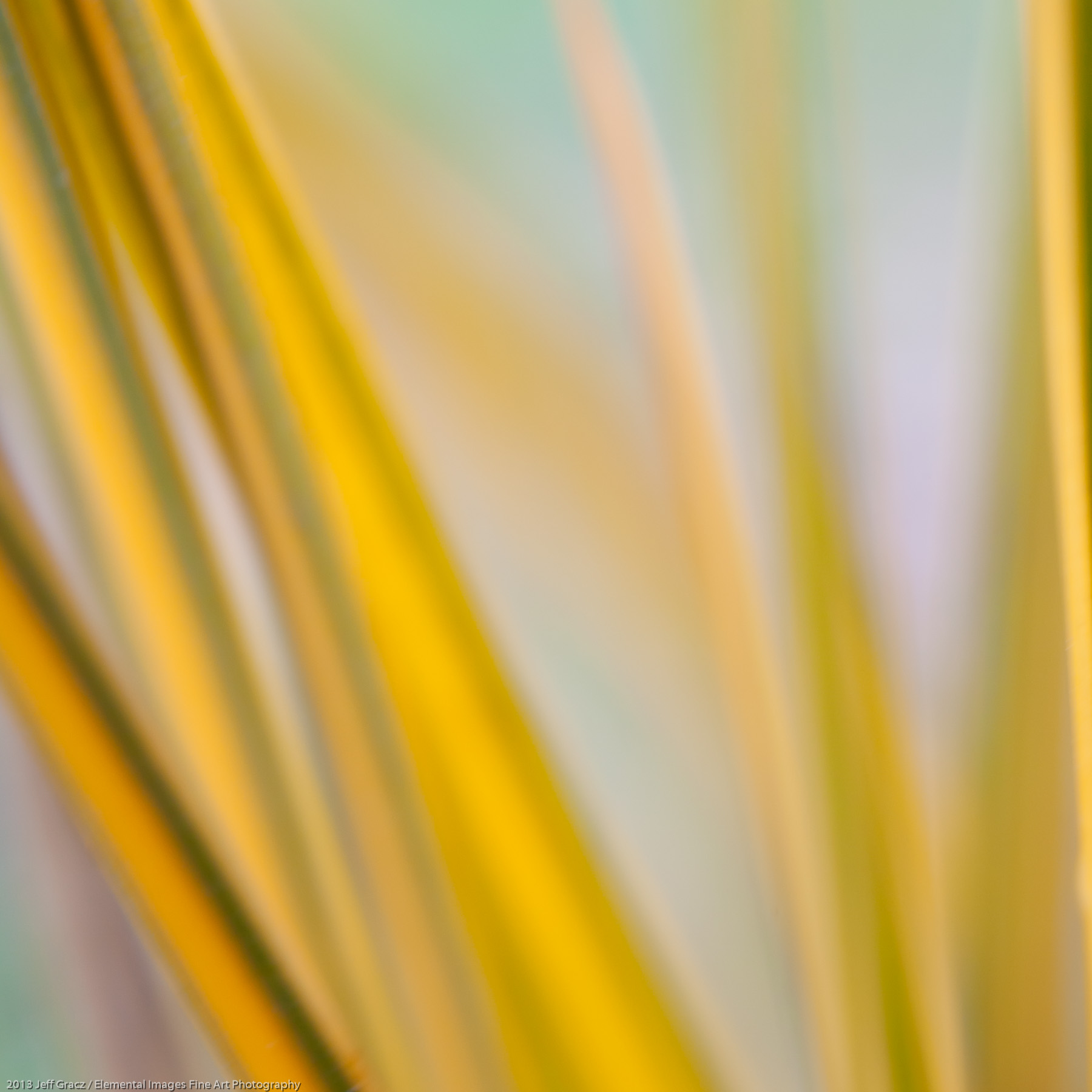 Grasses XXXIX | Portland | OR | USA - © 2013 Jeff Gracz / Elemental Images Fine Art Photography - All Rights Reserved Worldwide