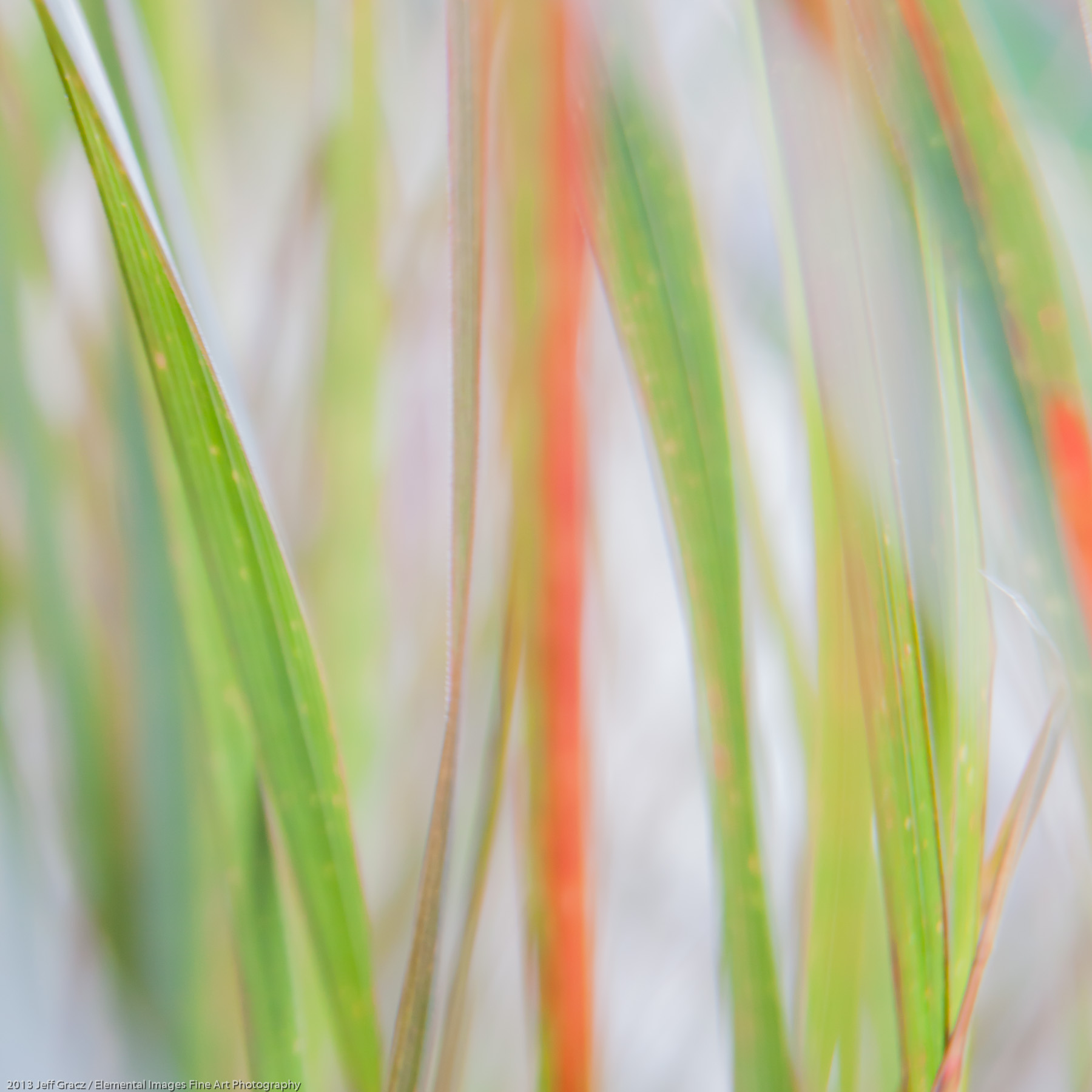 Grasses XLII | Portland | OR | USA - © 2013 Jeff Gracz / Elemental Images Fine Art Photography - All Rights Reserved Worldwide