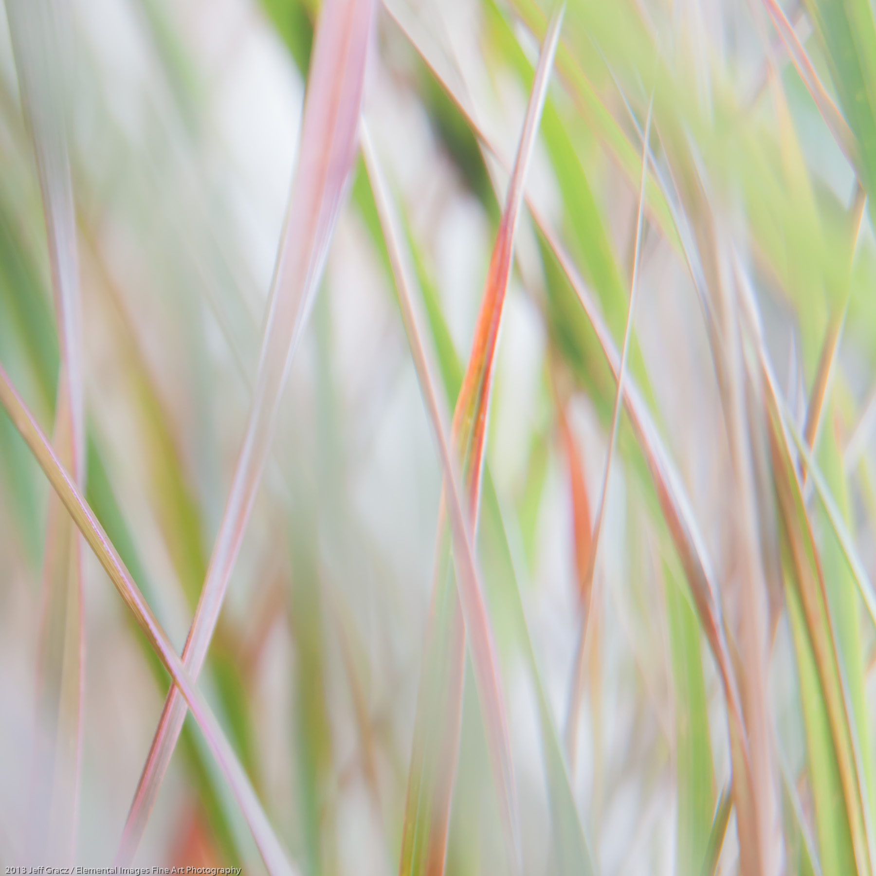 Grasses XLIX   Portland   OR   USA - © 2013 Jeff Gracz / Elemental Images Fine Art Photography - All Rights Reserved Worldwide