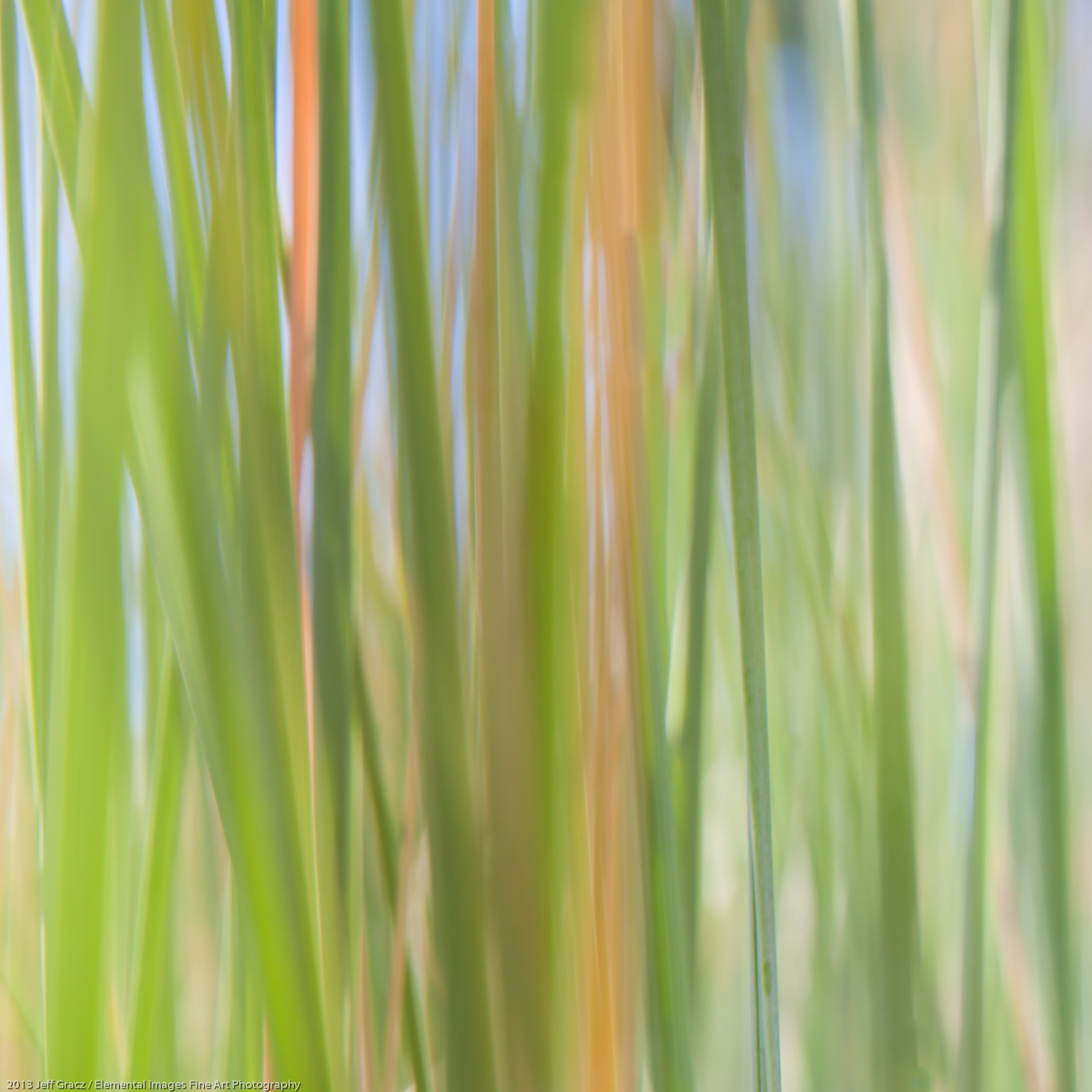 Grasses LXII | Portland | OR | USA - © 2013 Jeff Gracz / Elemental Images Fine Art Photography - All Rights Reserved Worldwide