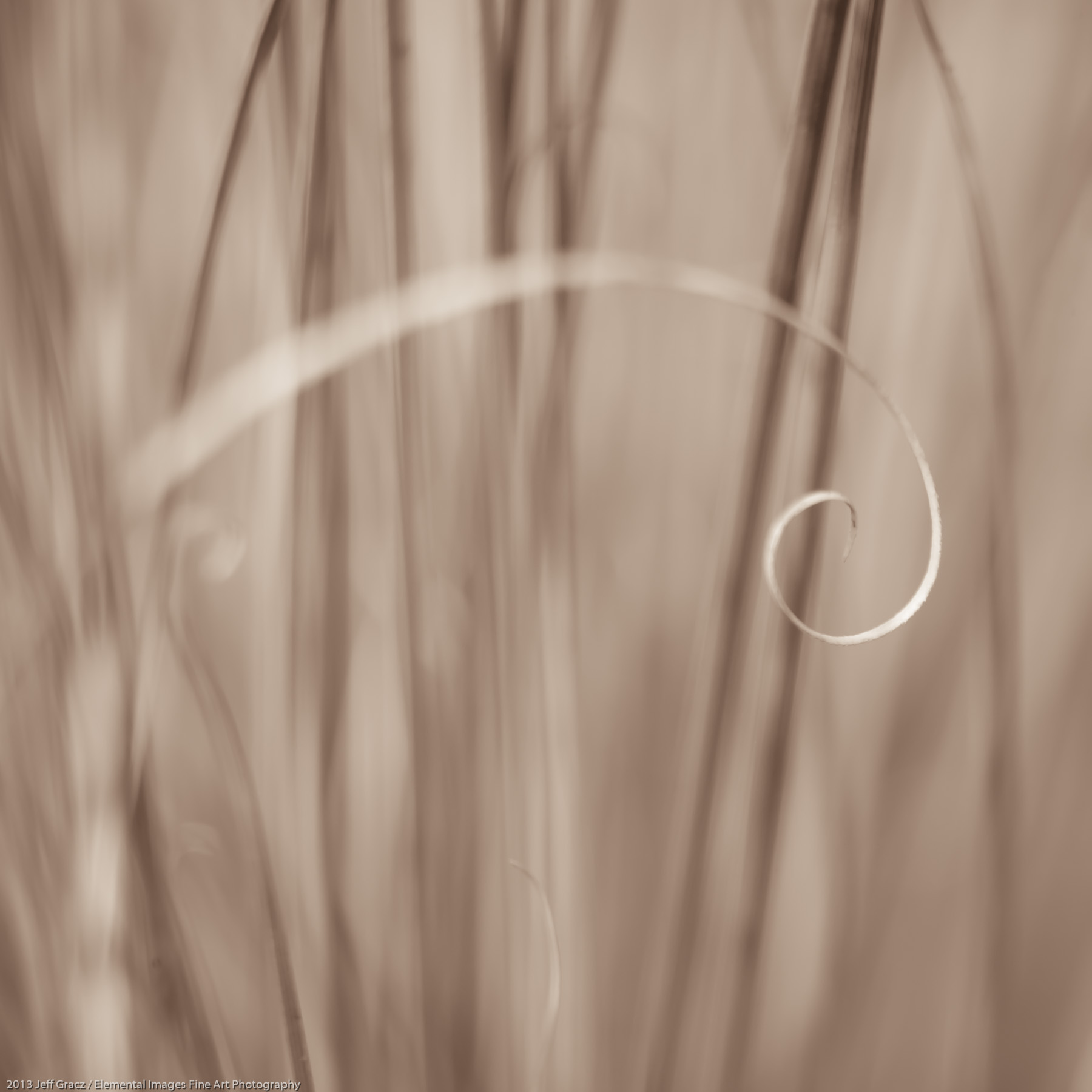 Grasses LXI | Portland | OR | USA - © 2013 Jeff Gracz / Elemental Images Fine Art Photography - All Rights Reserved Worldwide
