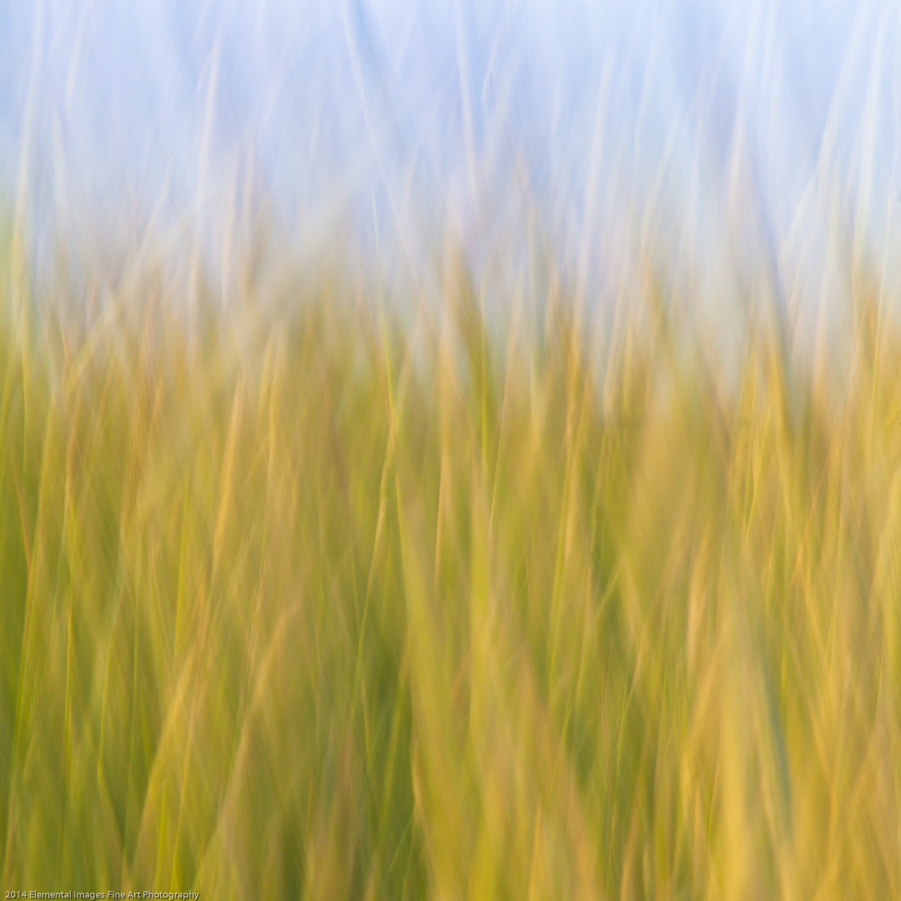 Grasses CII | The Palouse | WA | USA - © 2014 Elemental Images Fine Art Photography - All Rights Reserved Worldwide