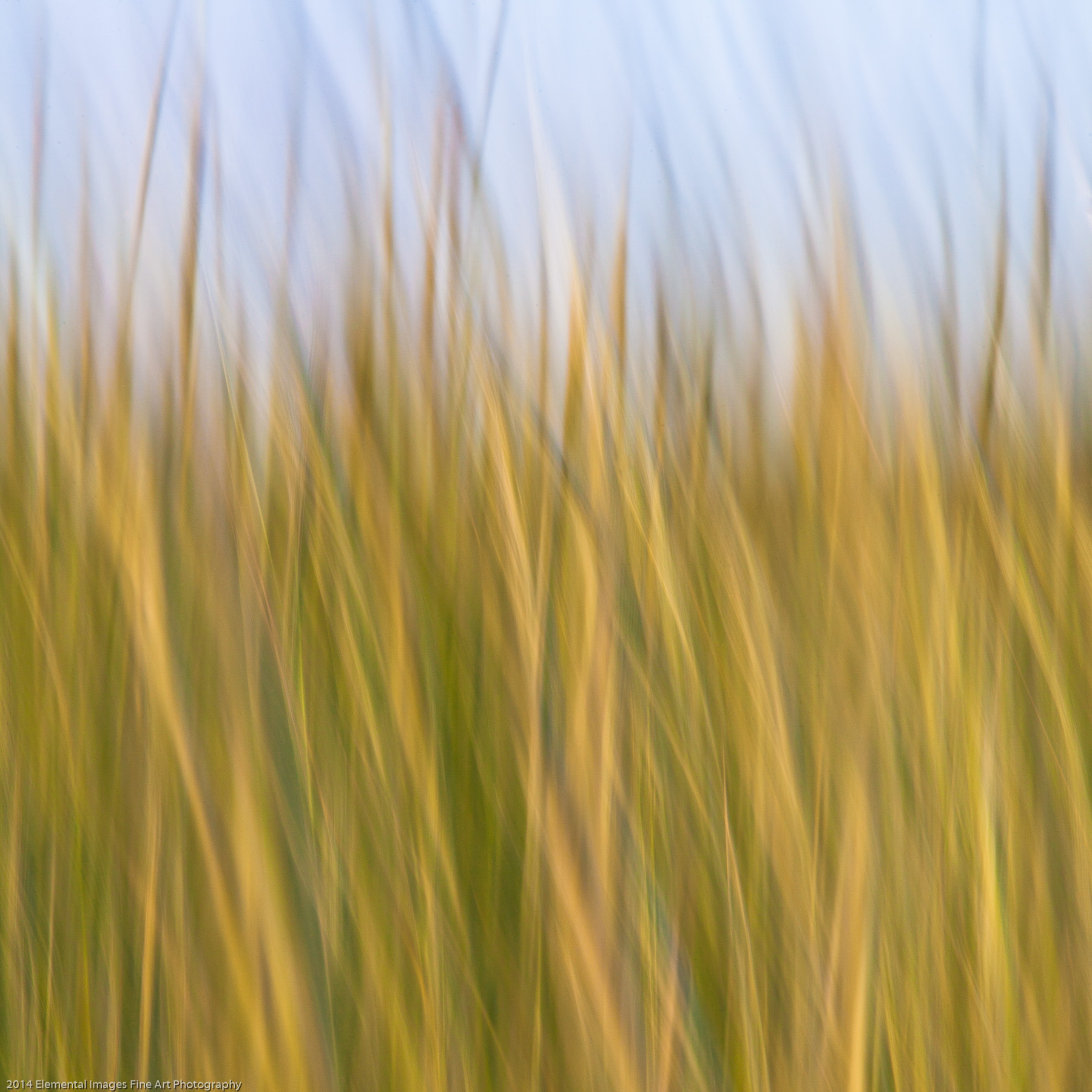 Grasses CIII | The Palouse | WA | USA - © 2014 Elemental Images Fine Art Photography - All Rights Reserved Worldwide