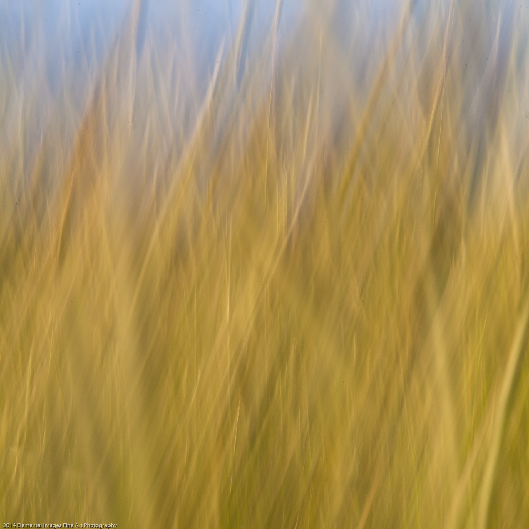 Grasses CIX | The Palouse | WA | USA - © 2014 Elemental Images Fine Art Photography - All Rights Reserved Worldwide