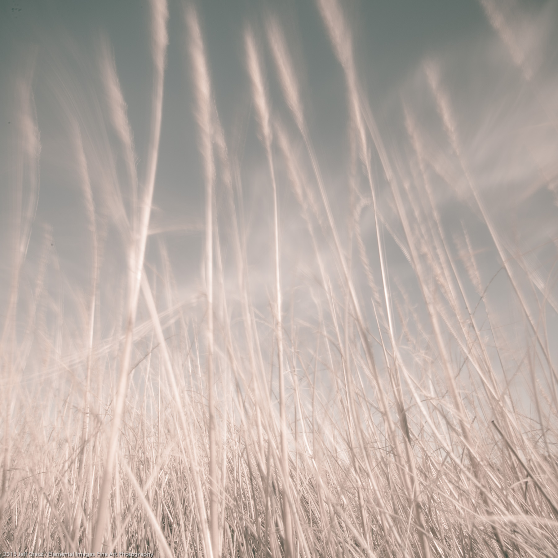 Grasses CXXXVII | Ocean Shores | WA | USA - © 2015 Jeff Gracz / Elemental Images Fine Art Photography - All Rights Reserved Worldwide