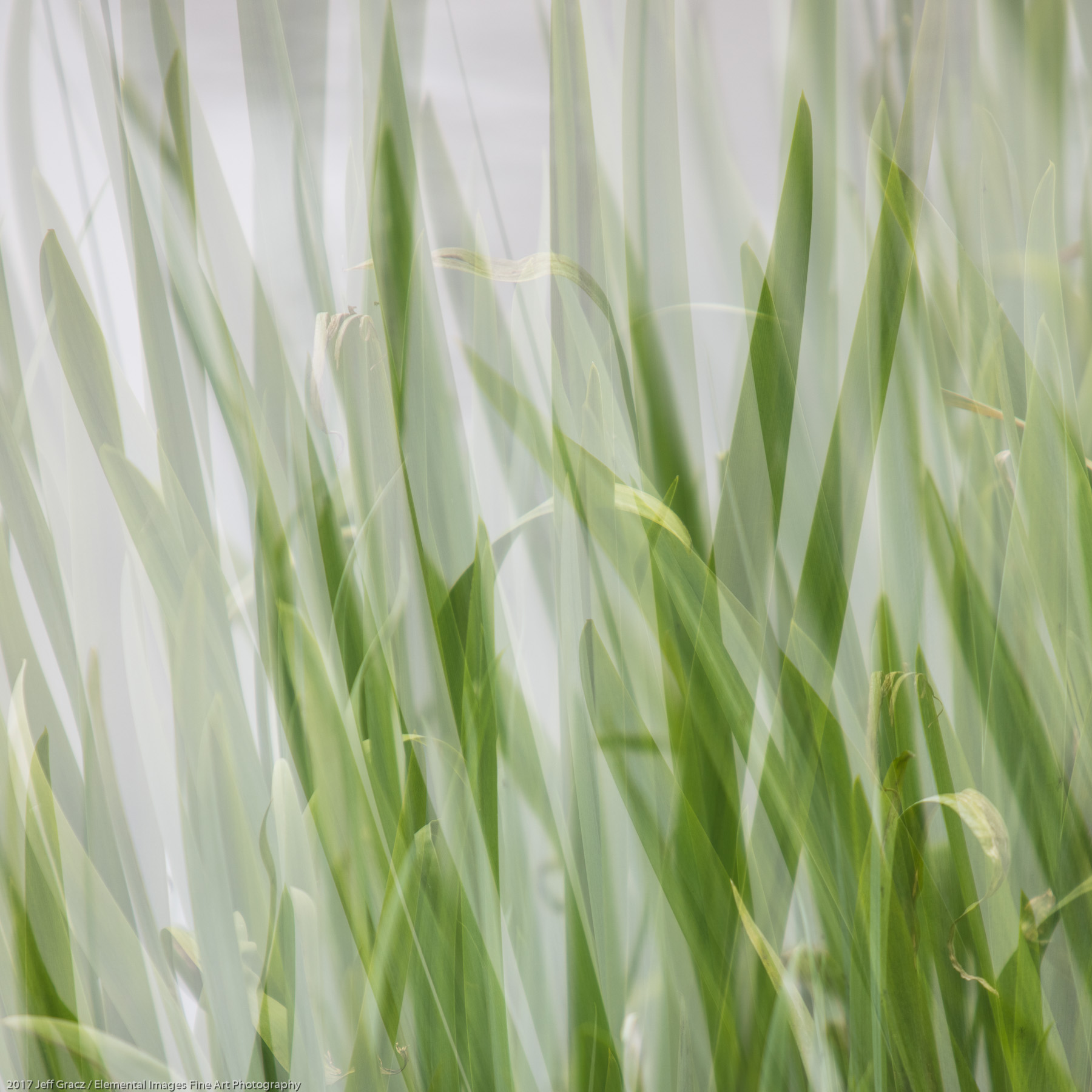 Grasses #142 | Portland | OR | USA - © 2017 Jeff Gracz / Elemental Images Fine Art Photography - All Rights Reserved Worldwide