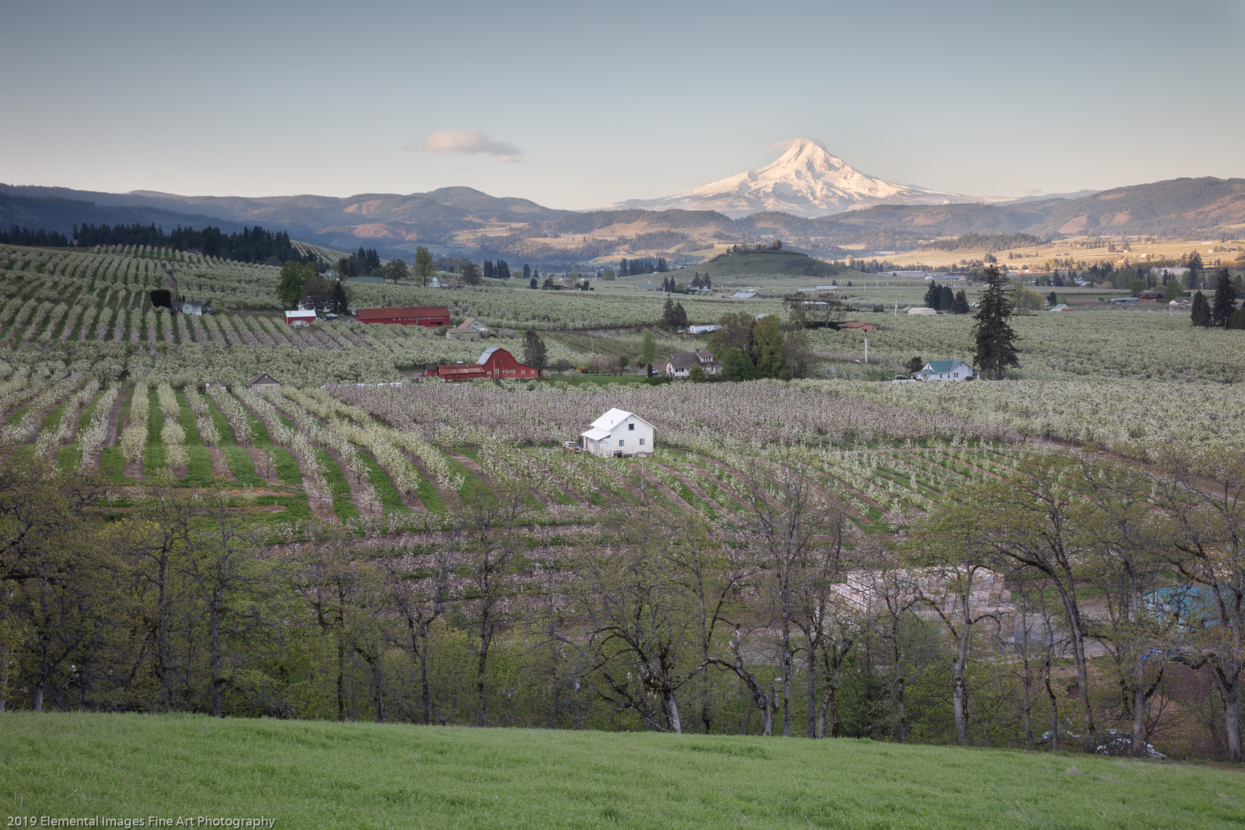 Mt. Hood view | Hood River | OR | USA - © 2019 Elemental Images Fine Art Photography - All Rights Reserved Worldwide