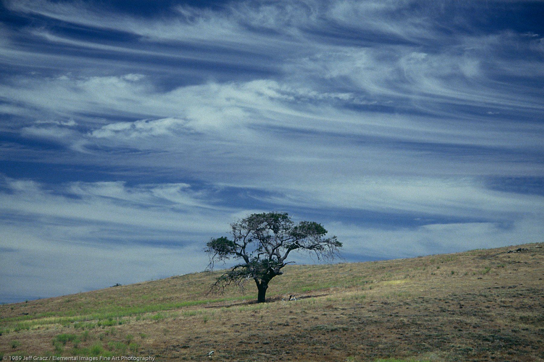 lone tree with cirrus clouds | Julian | CA | USA - © © 1989 Jeff Gracz / Elemental Images Fine Art Photography - All Rights Reserved Worldwide