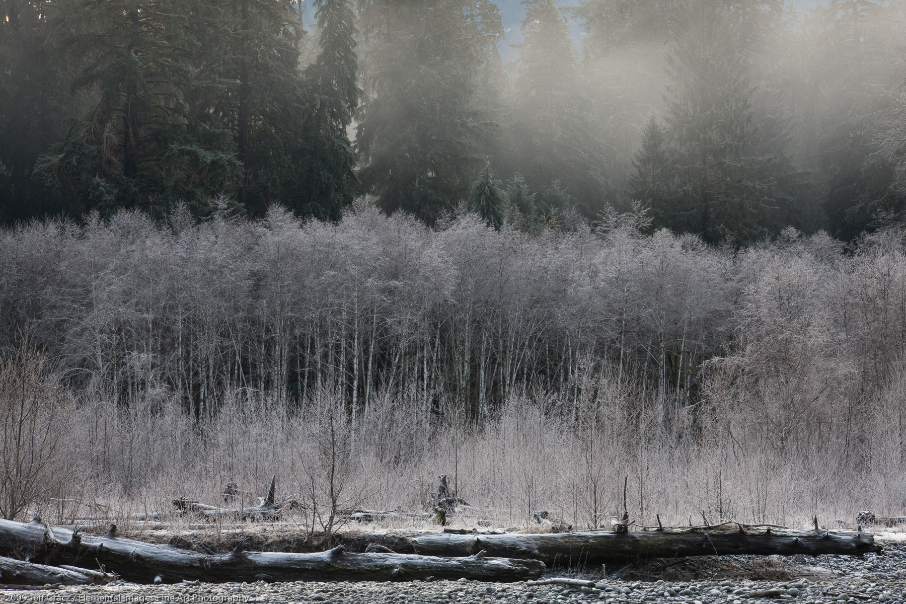 Misty Morning with Frost Covered Alders | Olympic National Park | WA | USA - © 2009 Jeff Gracz / Elemental Images Fine Art Photography - All Rights Reserved Worldwide