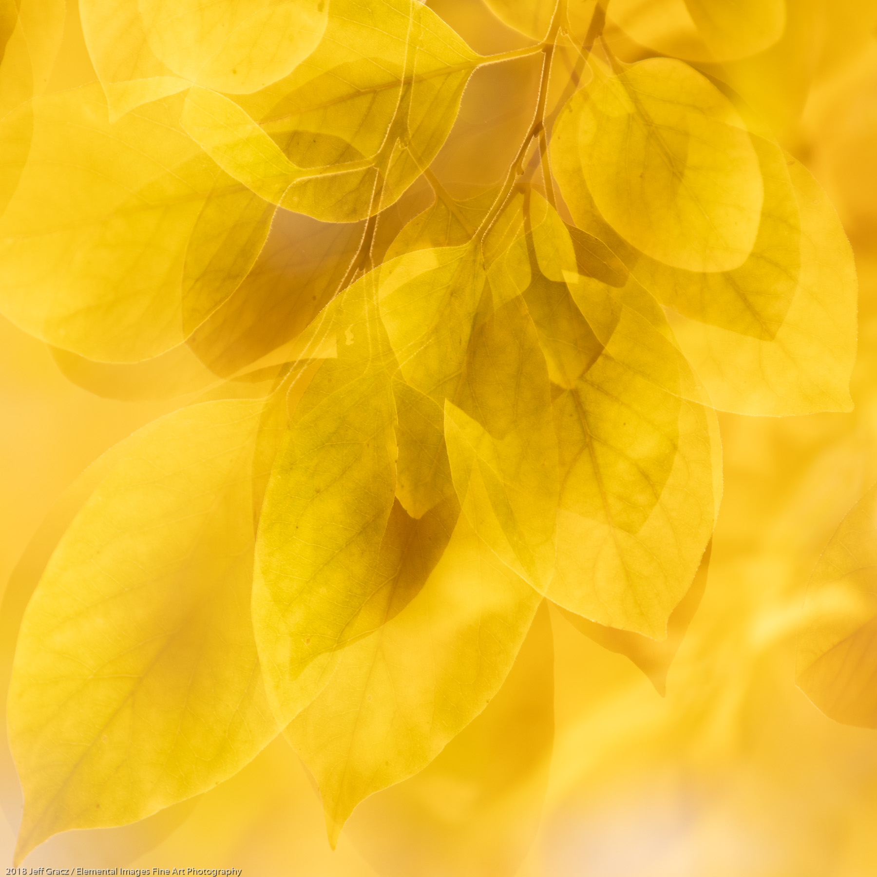 Leaves #180 | Portland | OR | USA - © 2018 Jeff Gracz / Elemental Images Fine Art Photography - All Rights Reserved Worldwide