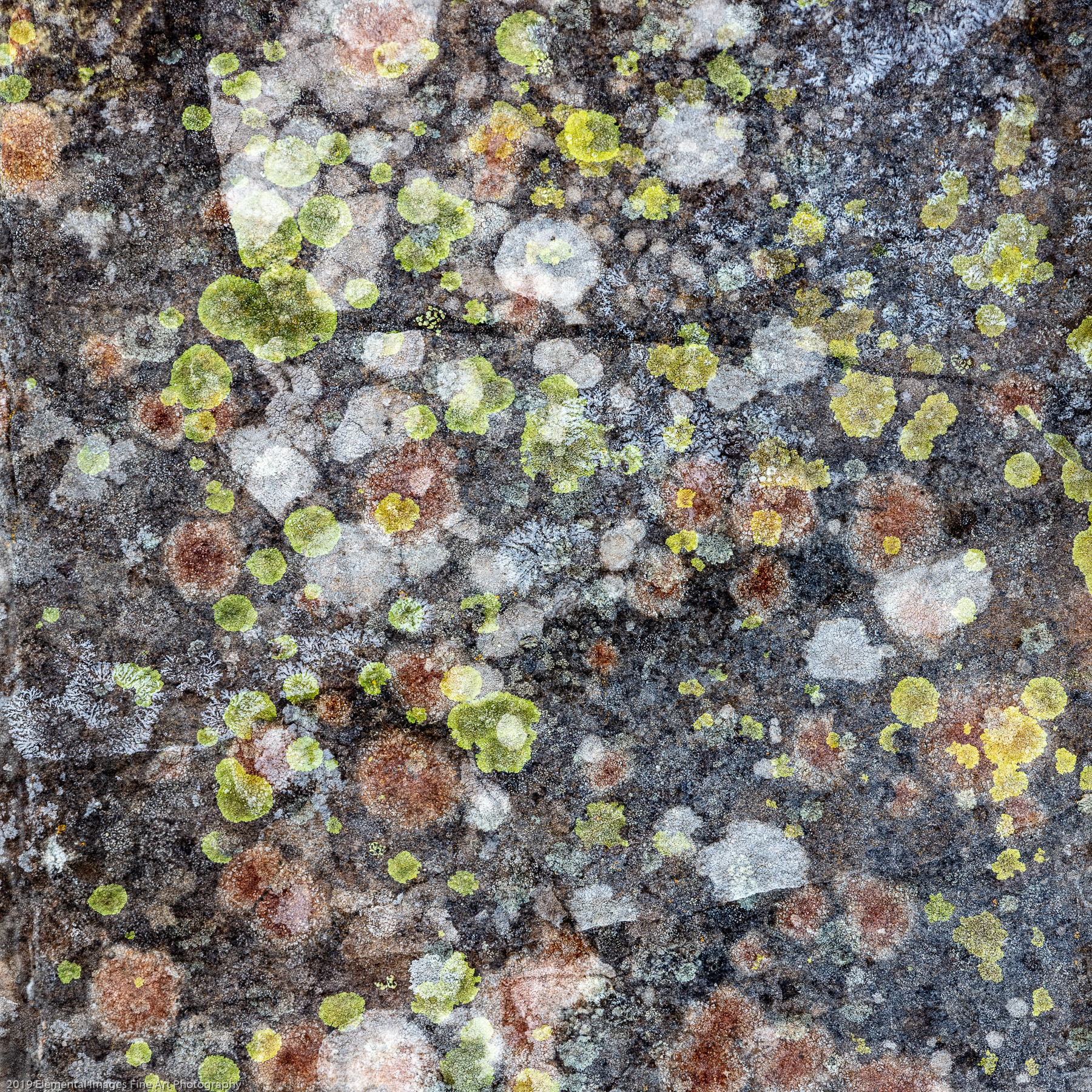 Lichen #1 | Klickitat Trail | WA | USA - © 2019 Elemental Images Fine Art Photography - All Rights Reserved Worldwide