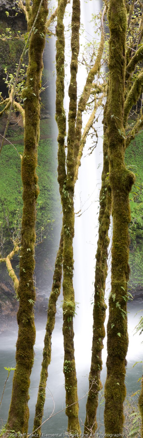 Tree trunks and waterfalls |  | OR | USA - © © 2008 Jeff Gracz / Elemental Images Fine Art Photography - All Rights Reserved Worldwide