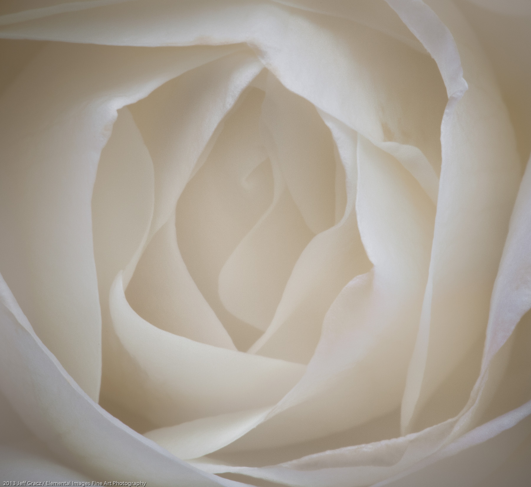 Roses XXXVIII | Portland | OR | USA - © 2013 Jeff Gracz / Elemental Images Fine Art Photography - All Rights Reserved Worldwide