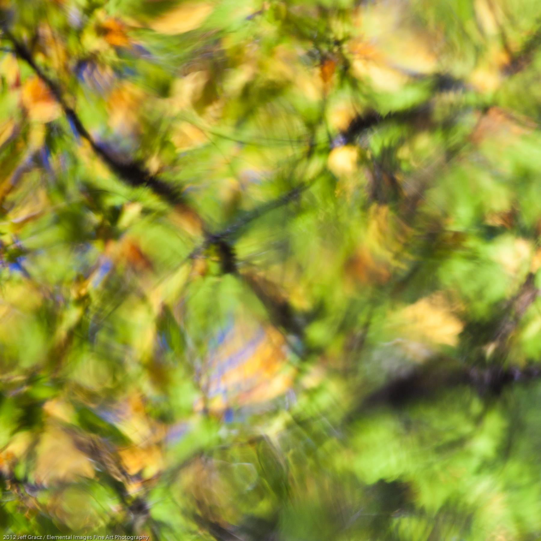 Water Reflection IV | Kejimkujik National Park | Nova Scotia | Canada - © 2012 Jeff Gracz / Elemental Images Fine Art Photography - All Rights Reserved Worldwide