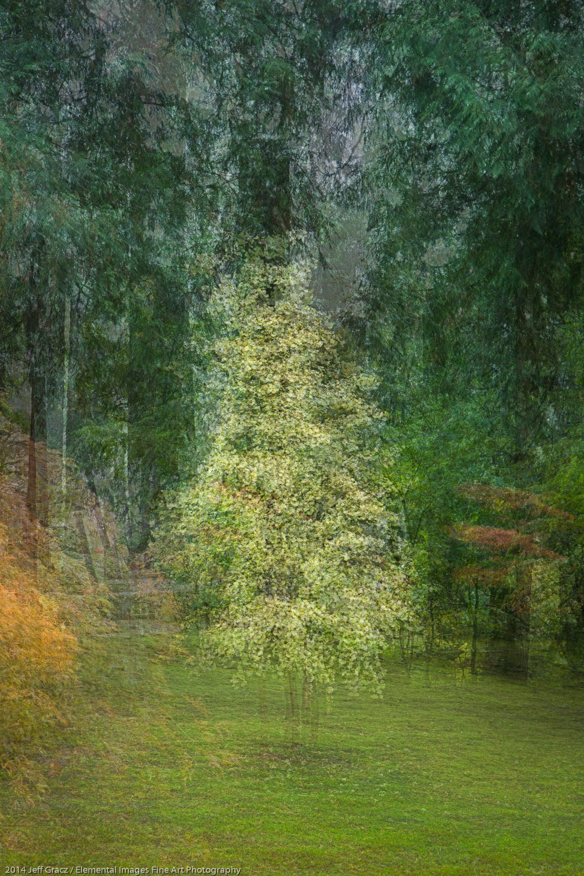 Arborhoods Series: Garden Gingko | Portland | OR | USA - © 2014 Jeff Gracz / Elemental Images Fine Art Photography - All Rights Reserved Worldwide