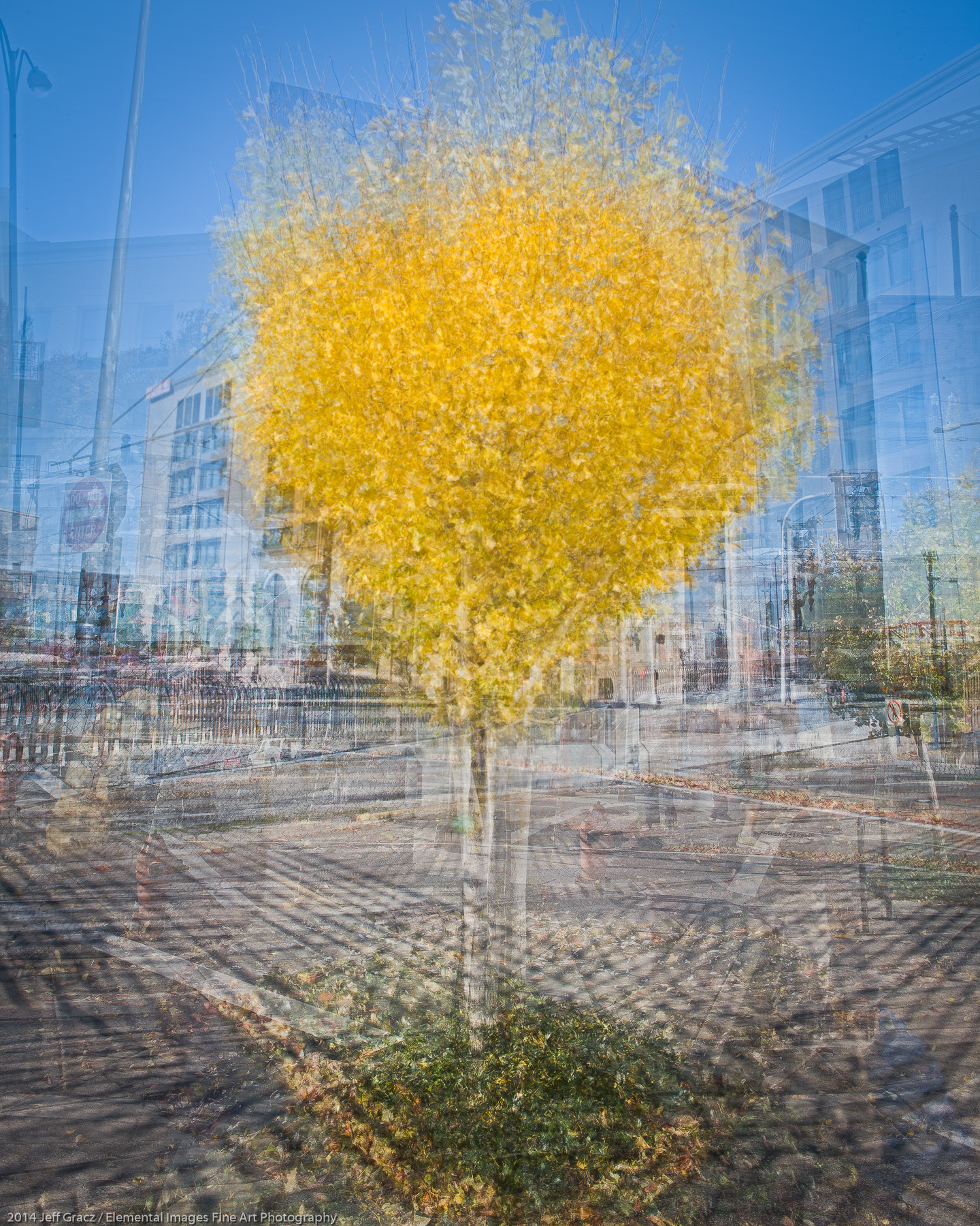 Arborhoods Series: Street Gingko   Portland   OR   USA - © 2014 Jeff Gracz / Elemental Images Fine Art Photography - All Rights Reserved Worldwide