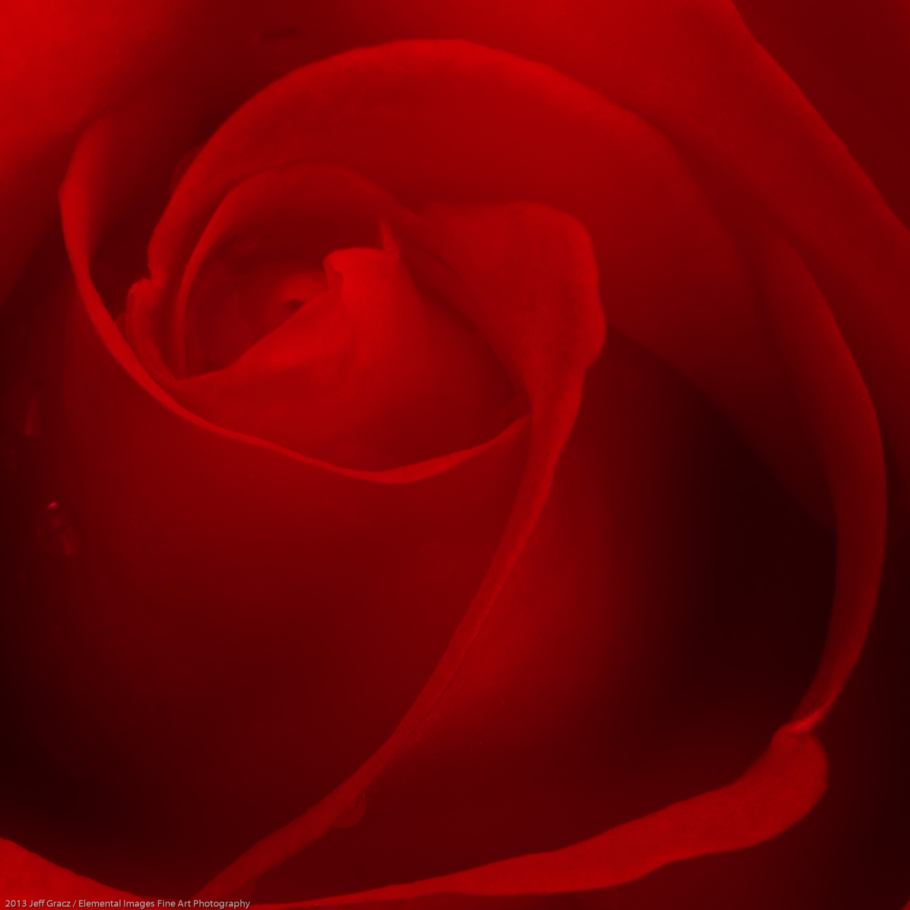 Roses XLVI   Portland   OR   USA - © 2013 Jeff Gracz / Elemental Images Fine Art Photography - All Rights Reserved Worldwide