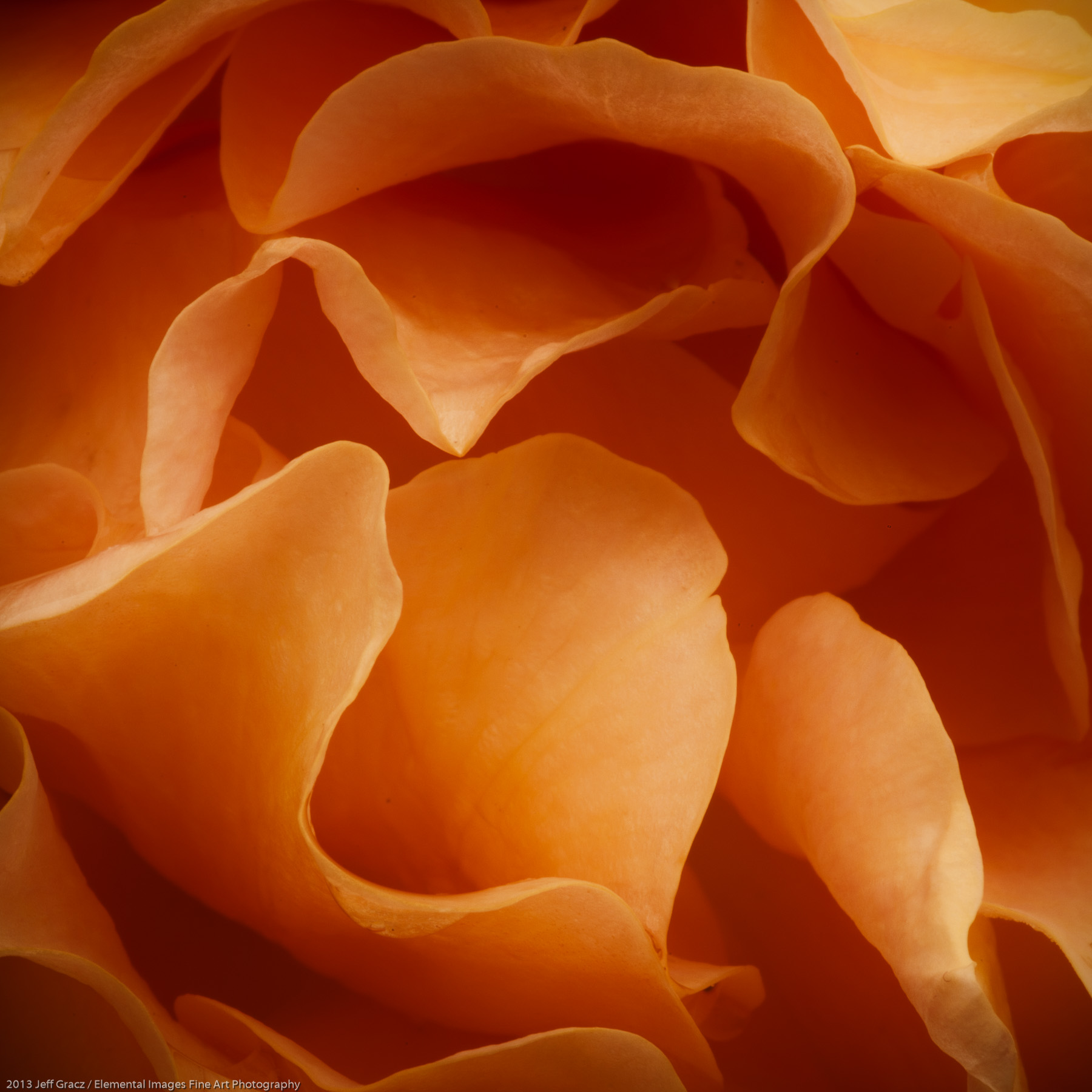 Roses XLiX | Portland | OR | USA - © 2013 Jeff Gracz / Elemental Images Fine Art Photography - All Rights Reserved Worldwide